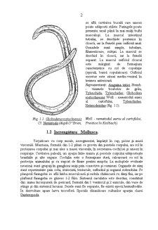 Caractere Generale ale Daunatorilor Plantelor Cultivate - Pagina 2