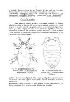 Caractere Generale ale Daunatorilor Plantelor Cultivate - Pagina 4