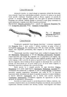 Caractere Generale ale Daunatorilor Plantelor Cultivate - Pagina 5