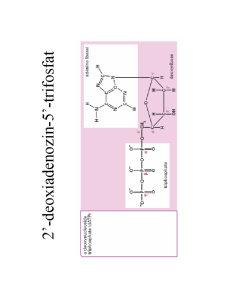 Structura ADN-ului și Codul Genetic - Pagina 3