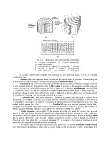 Constructii din Lemn - Pagina 3