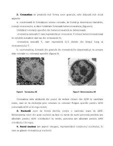Nucleul - Pagina 5