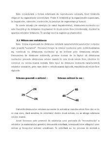 Mitoza - Pagina 2