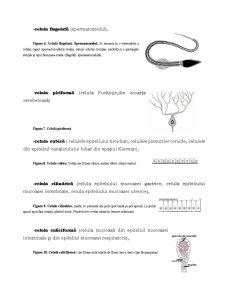 Proliferare și Diferențiere Celulară - Pagina 3