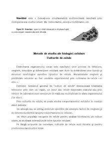 Proliferare și Diferențiere Celulară - Pagina 5