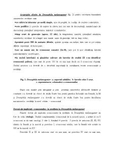 Mecanismele Eredității la Nivel Celular - Pagina 4