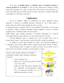 Reglarea Exprimării Genelor la Eucariote - Pagina 5