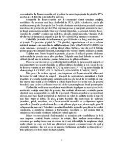 Importanta si Raspandirea Florii–Soarelui in Lume si in Romania - Pagina 2