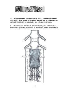Maduva Spinarii - Pagina 3