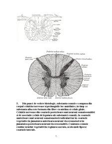 Maduva Spinarii - Pagina 5