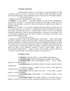 Clasificarea Tesuturilor Vegetale dupa Forma si Grad de Diferentiere Celulara - Pagina 4