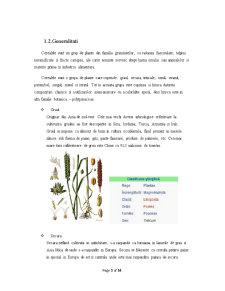 Procesarea Produselor Expandate și Extrudate din Cereale - Pagina 3
