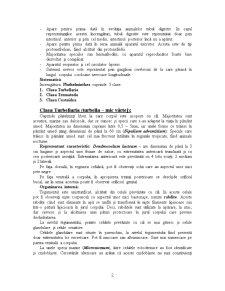 Diviziunea Triploblastica - Pagina 2