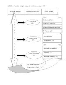 Proiectarea unui Sistem Informatic Privind Contabilizarea Imobilizărilor Corporale - Pagina 5