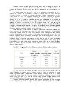Culturi Energetice - Pagina 4