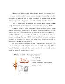 Bolile Secarei - Pagina 2