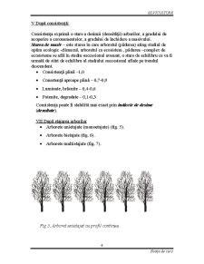 Silvicultura - Stratul Arborilor - Pagina 5