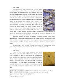 Efectele Materialelor Uzuale Utilizate in Izolarea Termica asupra Mediului Natural - Pagina 5