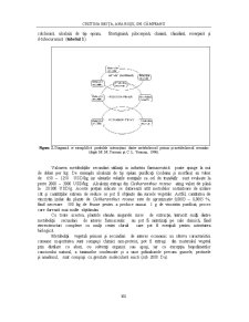 Compusi Bioactivi de Origine Vegetala - Abordari Biotehnologice - Pagina 4