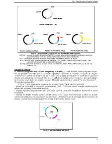 Ingineria Drojdiilor - Pagina 2