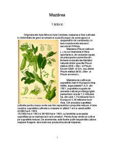 Materii Prime Vegetale - Mazarea - Pisum Sativum - Pagina 3