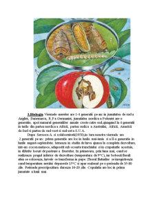 Viermele Merelor - Lespeyresia Pomonella - Pagina 4