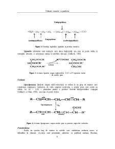 Enzime Utilizate in Panificatie - Pagina 5