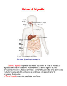 Sistemul Digestiv - Pagina 1