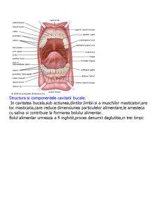 Sistemul Digestiv - Pagina 3