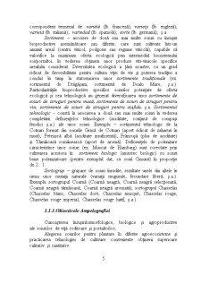 Ampelografie - Pagina 5