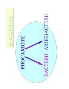Microbiologie Generala - Curs 2 - Pagina 2