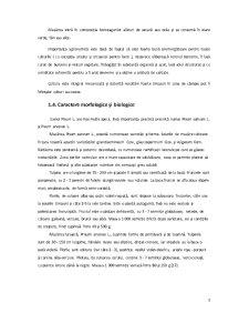 Sisteme de Asigurare a Calitatii - Conservele de Mazare - Pagina 4
