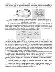 Microbiologia Specifică Produselor Alimentare - Pagina 4