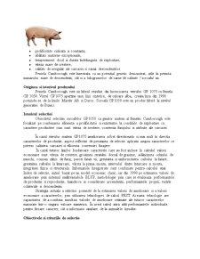 Studiu de Caz - Ferma de Suine - Reproductie - Pagina 2