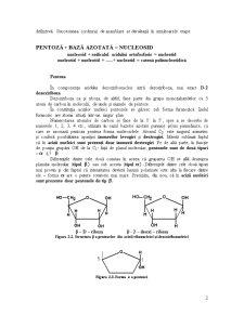 Acizii Nucleici - Detalii Structurale si Functionale - Pagina 2