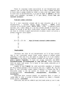 Acizii Nucleici - Detalii Structurale si Functionale - Pagina 4