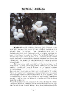 Inul, Canepa si Bumbacul - Principalele Plante Textile - Pagina 2