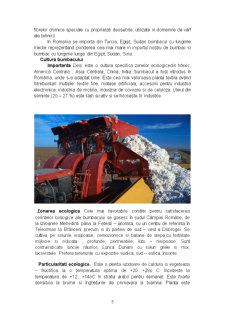 Inul, Canepa si Bumbacul - Principalele Plante Textile - Pagina 5