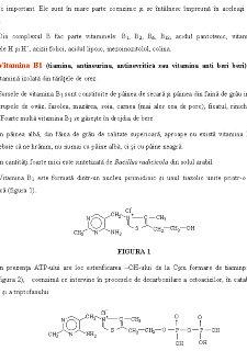 Complexul Vitaminic B - Pagina 5