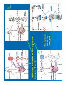 Biochimie Metabolica - Pagina 5