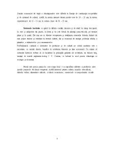Tehnologia de Cultivare a Pomilor Fructiferi - Marul - Pagina 4