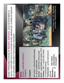 Antrax - Pagina 2