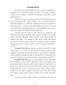 Orizonturi de Sol - Pagina 5