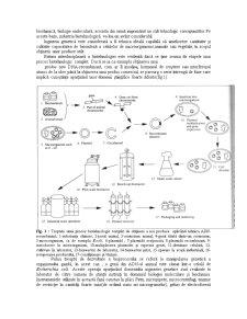 Tehnica Experimentala - Pagina 2