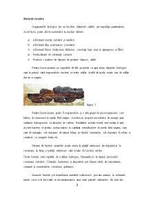 Coroziunea Microbiana a Materialelor - Pagina 3
