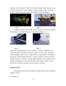Coroziunea Microbiana a Materialelor - Pagina 5