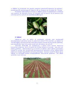 Actiunea Erbicidelor in Plante si Influenta asupra Proceselor Metabolice - Pagina 5