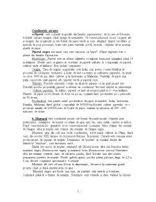 Plante Condimentare - Pagina 2