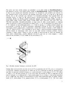 Rolul Acizilor Nucleici în Realizarea Diferitelor Caractere - Pagina 3