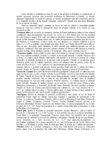 Analiza Piata Vinurilor - Pagina 5